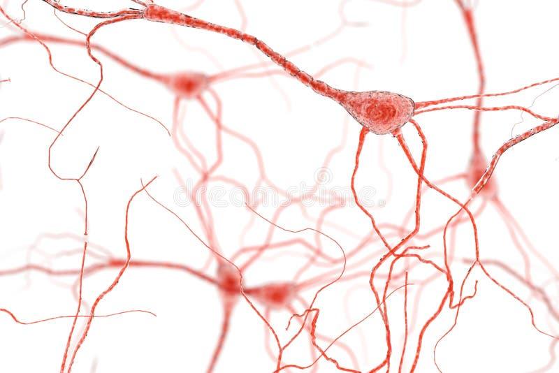 Neuron komórka, neurony na białym tle royalty ilustracja