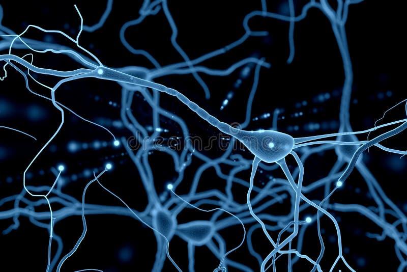 Neuron komórka, neurony na białym tle, pojedyncza neuron komórka w ludzkim mózg royalty ilustracja