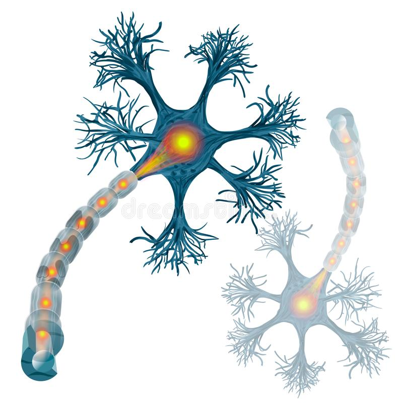Neuron that is the main part of the nervous system. Vector illustration vector illustration