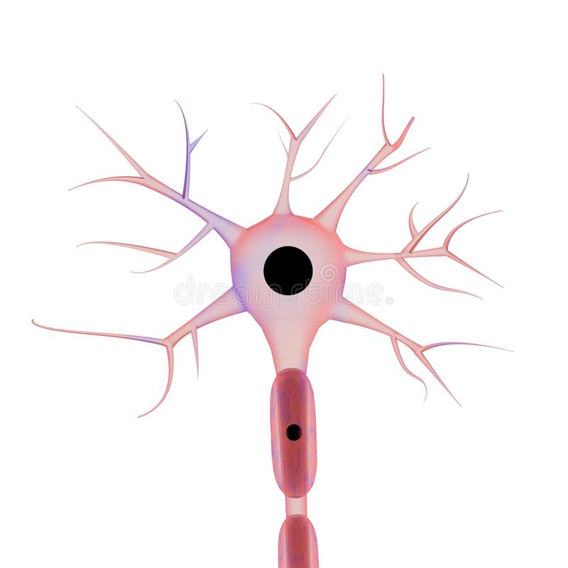 Neuron op witte achtergrond stock fotografie