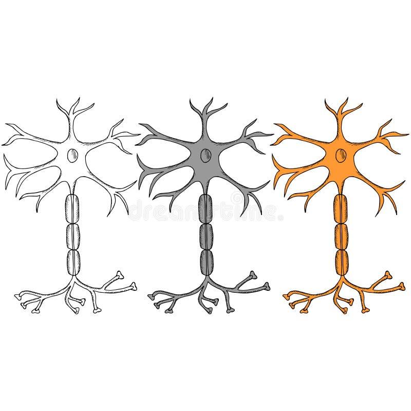 Neuron sketch in color, set stock illustration