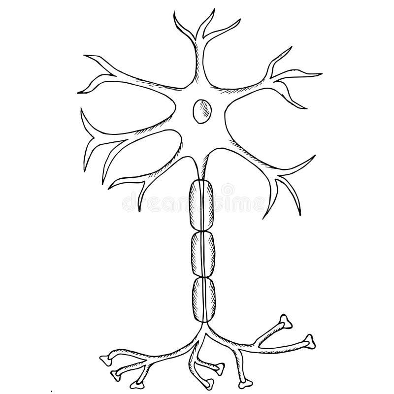 Neuron sketch royalty free illustration