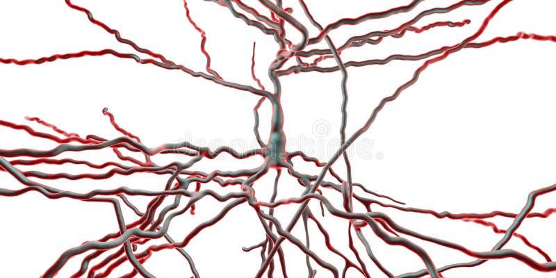 Neurona piramidal, neurona humana ilustración del vector