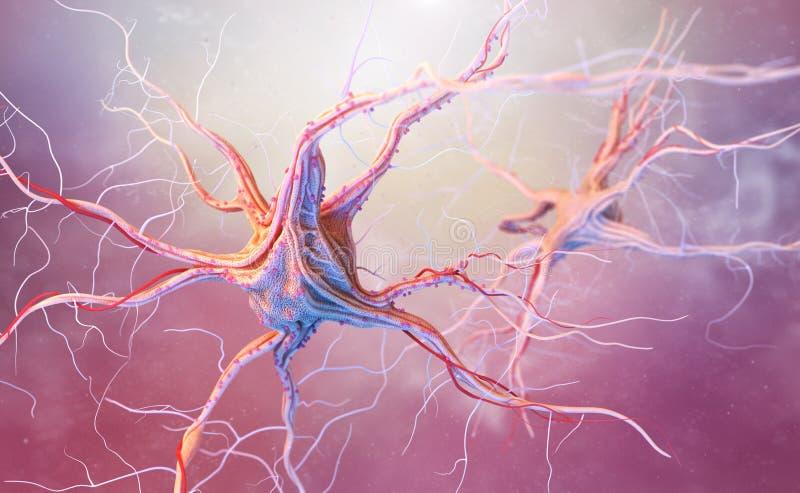 Neuronas y sistema nervioso stock de ilustración