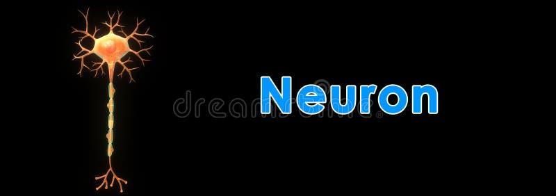 Download Neurone illustration stock. Illustration du instruction - 45367314