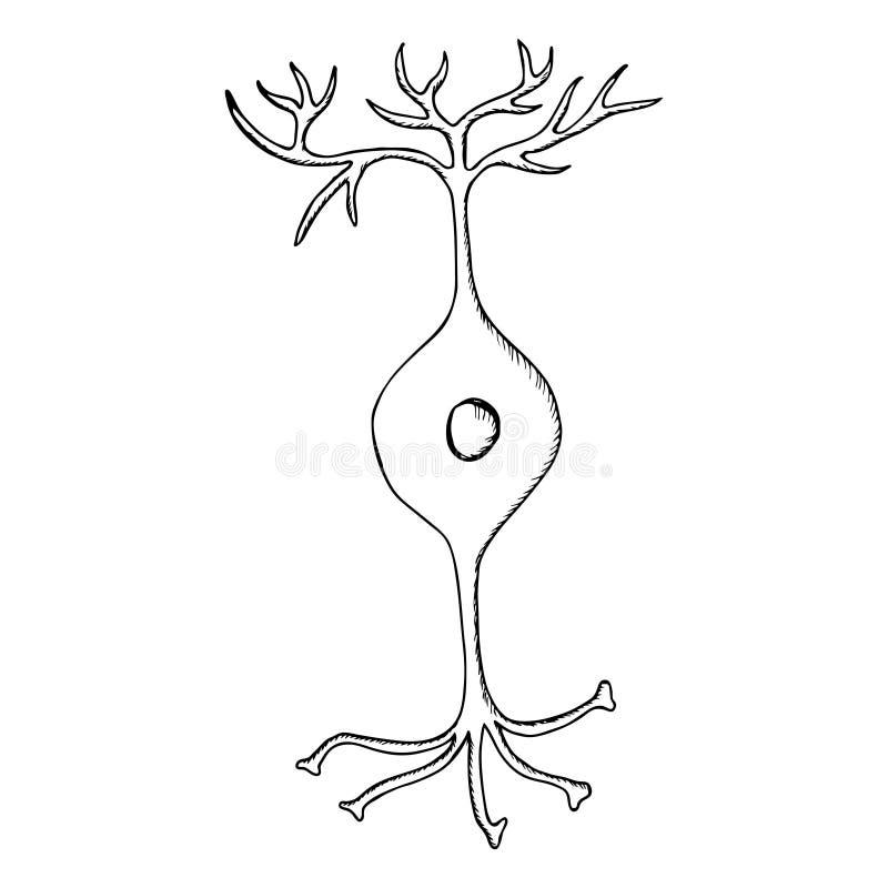 Neurone bipolaire, revêtement illustration stock