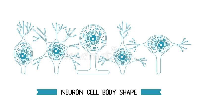 Neurone cell body stock illustration