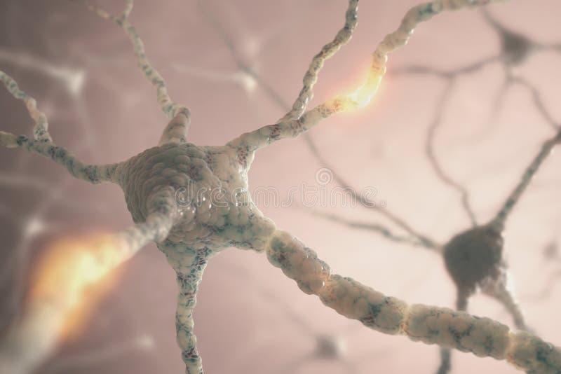 Neuronen stock foto