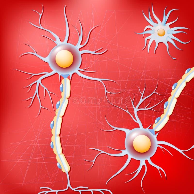 Neurones et cellules glial dans le cerveau sur le fond rouge illustration stock