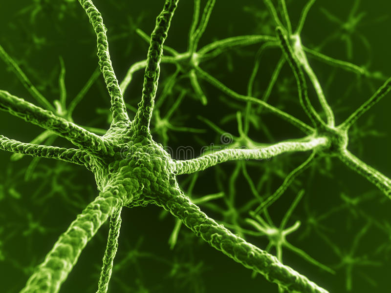 Download Neurons in green stock illustration. Image of biology - 22188196