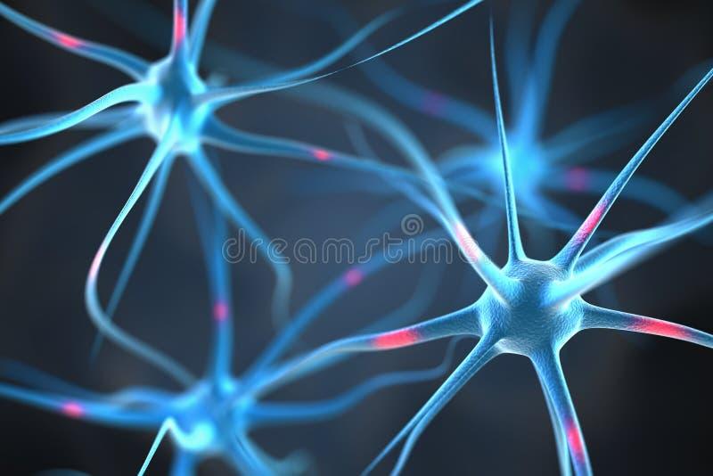 Neurons i hjärnan royaltyfri illustrationer