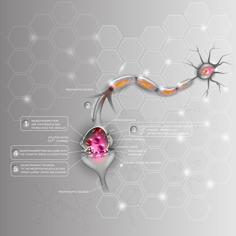Neurons och Synapse stock illustrationer