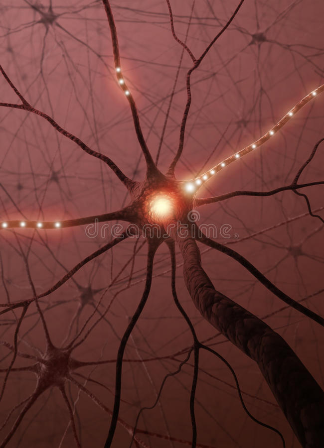 Free Neurons The Power Of The Mind Stock Photos - 10444243