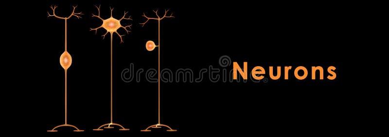 neurony ilustracja wektor