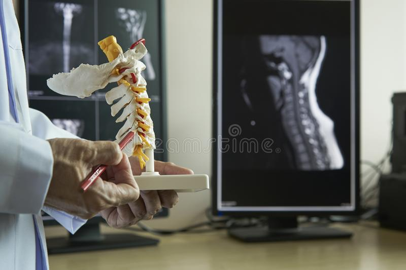A neurosurgeon pointing at cervical spine model. A neurosurgeon pointing and demonstrating anatomy of artificial human cervical spine model in medical office stock image