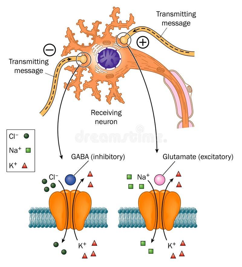 Neurotransmisores implicados en epilepsia ilustración del vector