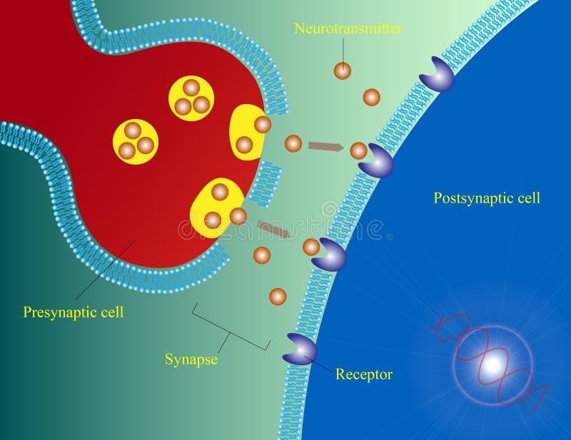 Neurotransmissor ilustração stock