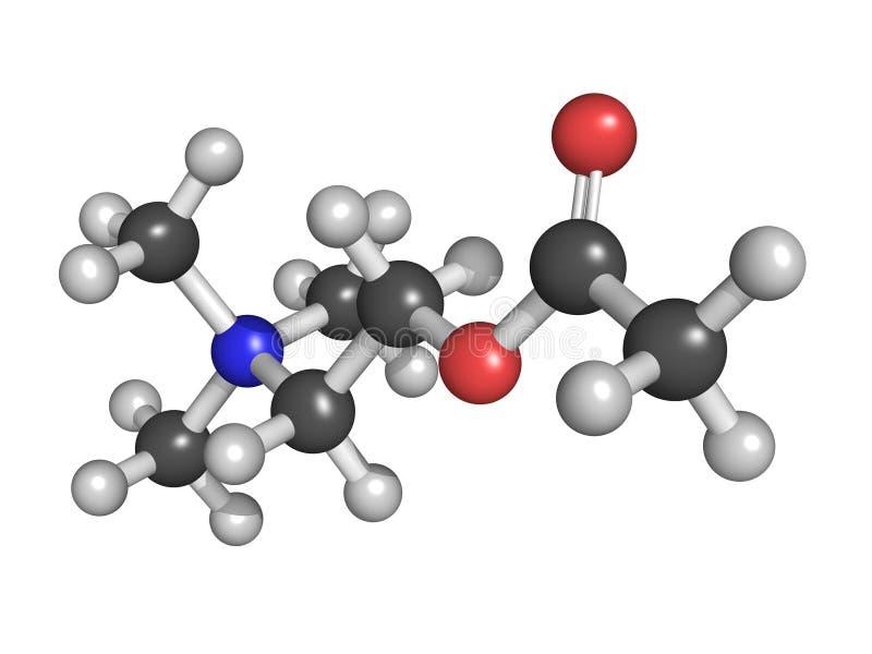 Neurotransmitter för Acetylcholine (ACh), molekylär modell royaltyfri illustrationer