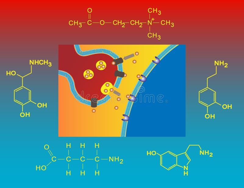 Neurotransmitters royalty-vrije illustratie