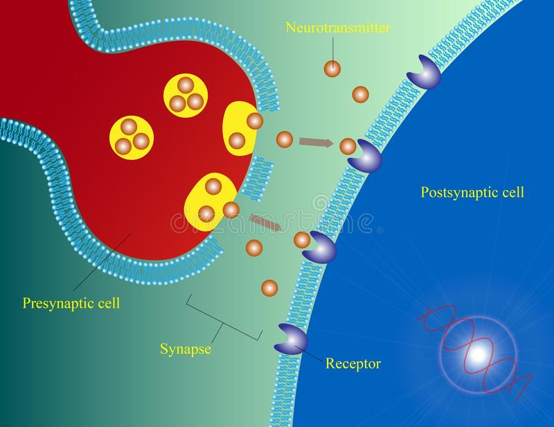 Neurotransmitters stock foto