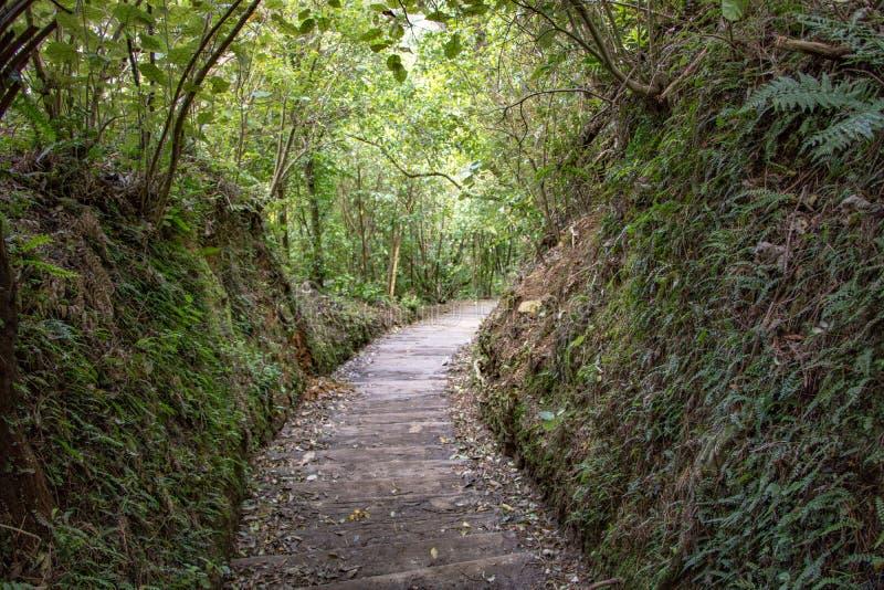 Neuseeland Fern Forest Hiking Track lizenzfreie stockfotos