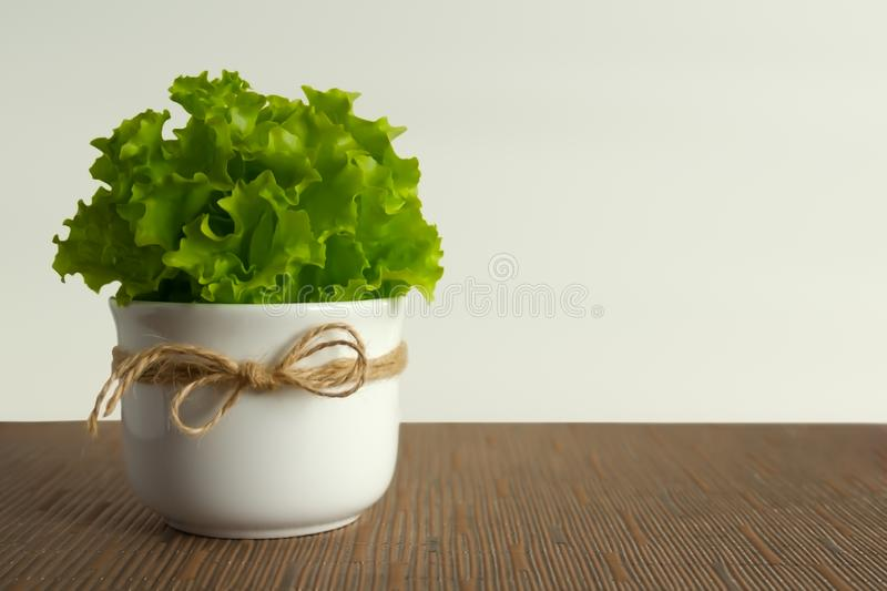 Green fresh salad. Neutral background with empty copy space for a healthy diet. Healthy eating concept. Green fresh salad. Closeup. Healthy lifestyle royalty free stock photos