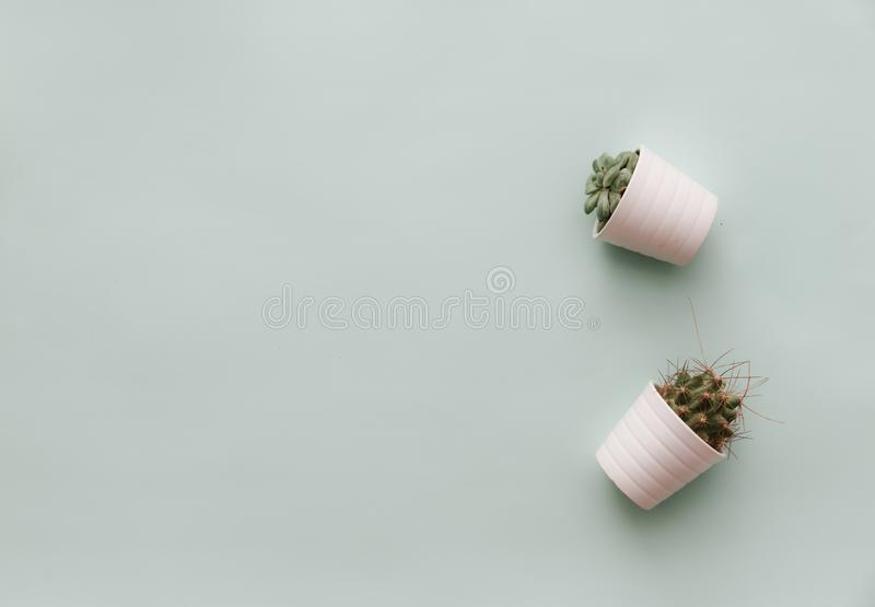 Neutral Minimalist Flat Lay Scene With potted cactus. Simple design royalty free stock photos