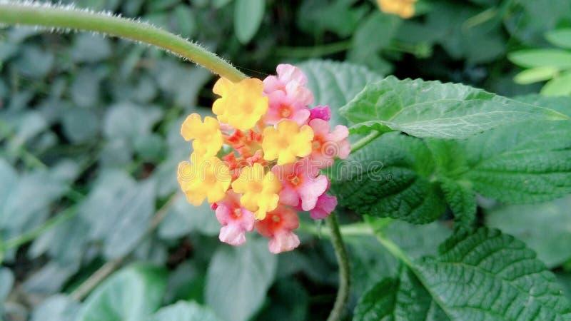 neutrale Schönheit einer netten geringfügigen Blume stockfoto