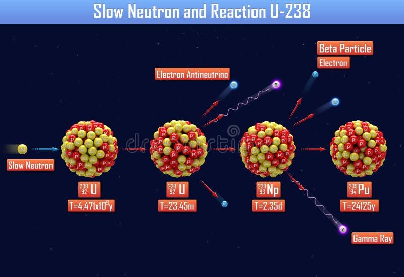 Neutron lent et réaction U-238 illustration de vecteur