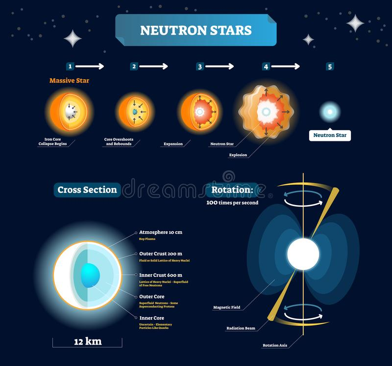Neutron stars vector illustration. Educational labeled scheme with massive star stages to explosion. Cross section with structure. Neutron stars vector stock illustration