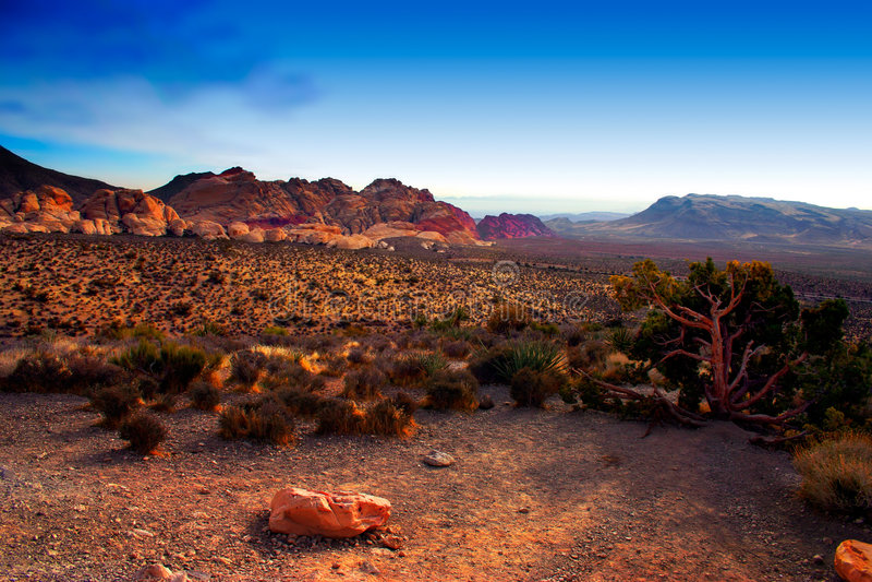 Nevada czerwone skały canyon obrazy stock
