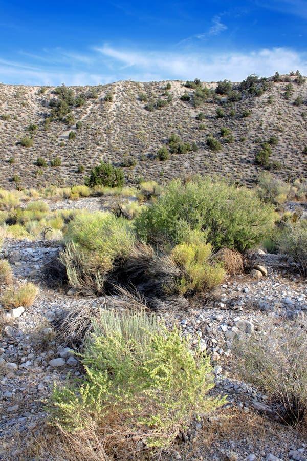 Nevada Desert Landscape arkivfoton