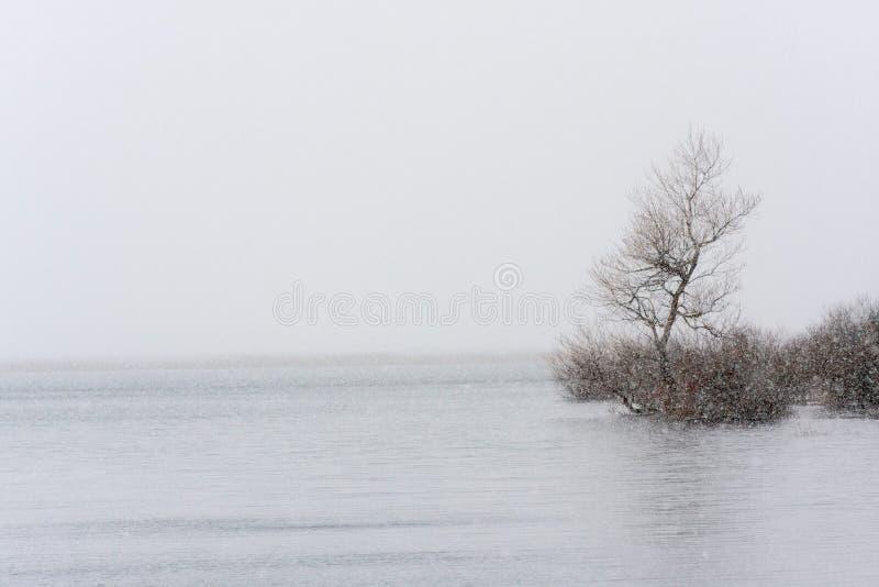 nevadas imágenes de archivo libres de regalías