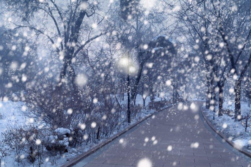 Nevadas hermosas en parque del invierno fotos de archivo