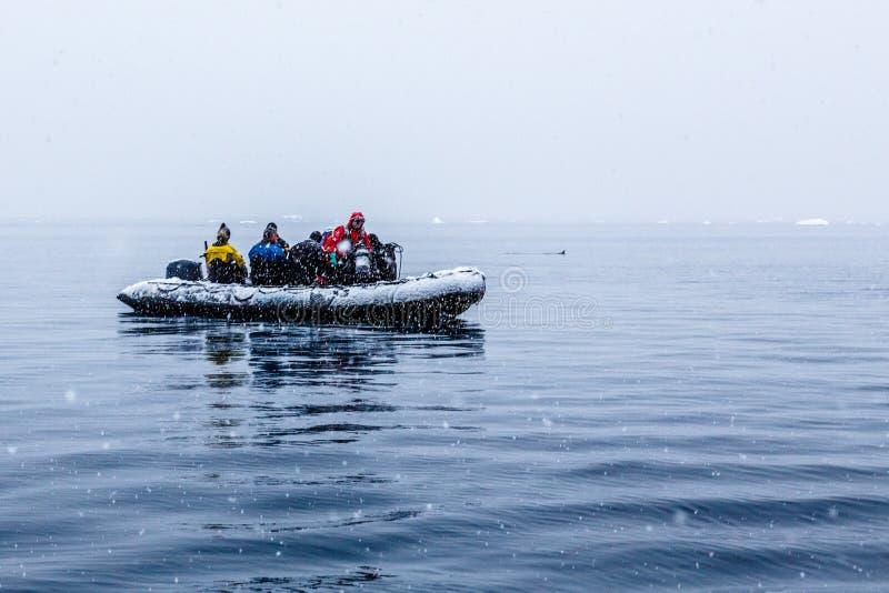 Nevadas sobre el barco del zodiaco con los buceadores polares congelados cerca de Almirante Brown, península antártica imagenes de archivo