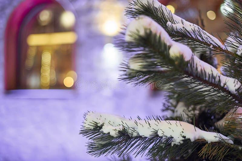 Nevadas y árbol nevoso en la noche fotografía de archivo