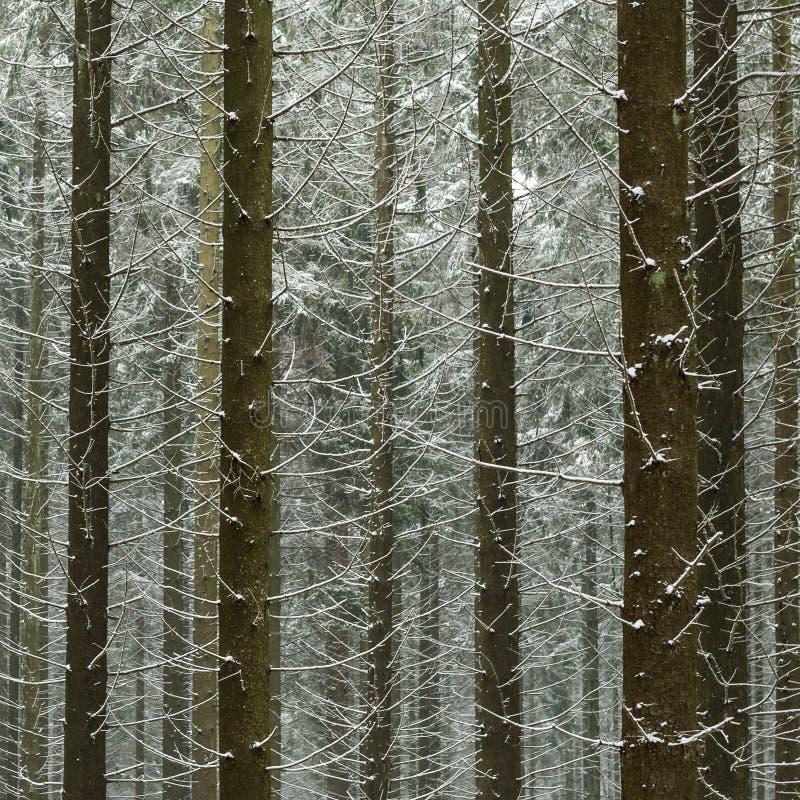 Nevado na floresta em Bélgica imagens de stock royalty free