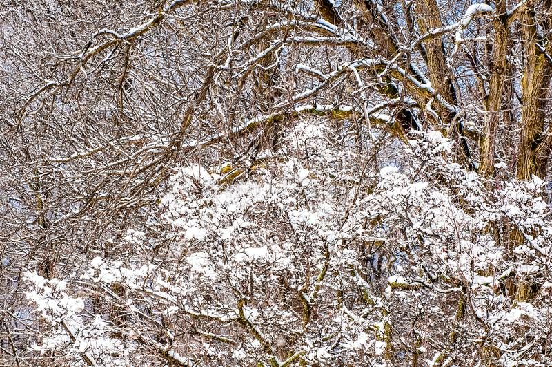 Nevado ramifica fondo del invierno imágenes de archivo libres de regalías