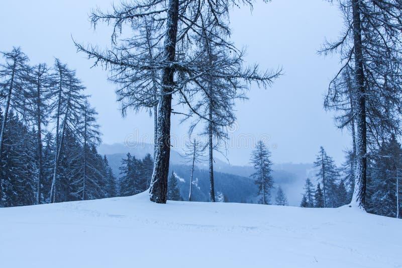 Nevado y paisaje de niebla del invierno de la montaña foto de archivo
