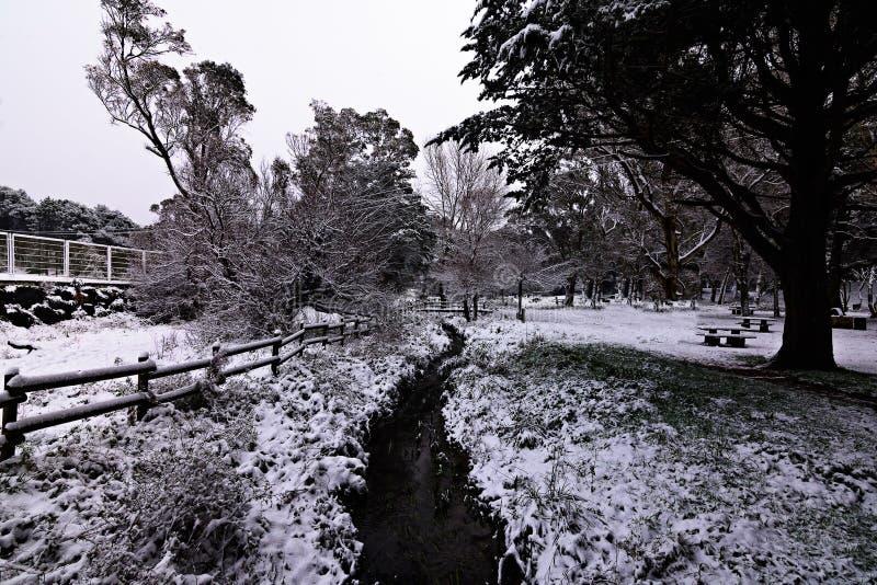 nevar imagens de stock