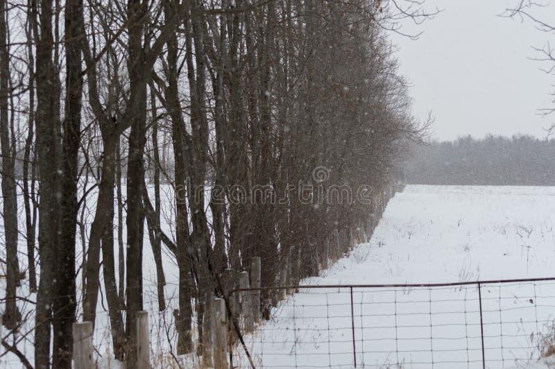 Nevar em um campo e em árvores do pasto ao longo da borda dela fotos de stock
