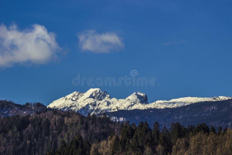 Neve alpina em Eslovênia Europa imagens de stock royalty free