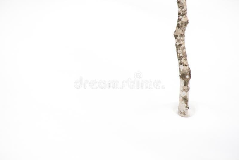 Neve bianca pura della foresta fotografia stock libera da diritti