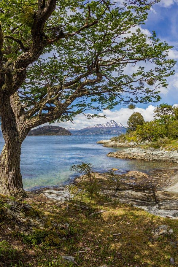 A neve cênico tampou as montanhas chilenas vistas de Tierra del Fuego National Park em Argentina imagens de stock