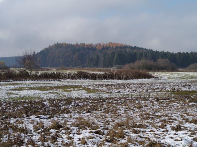 Neve caduta fresca su erba asciutta fotografia stock libera da diritti