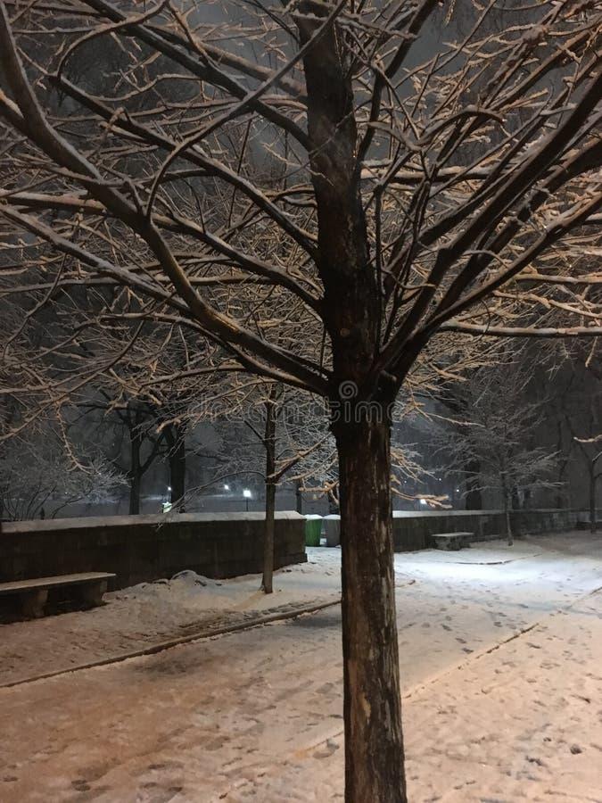 Neve che cade durante la sera nell'inverno al Central Park in Manhattan, New York, NY fotografie stock libere da diritti