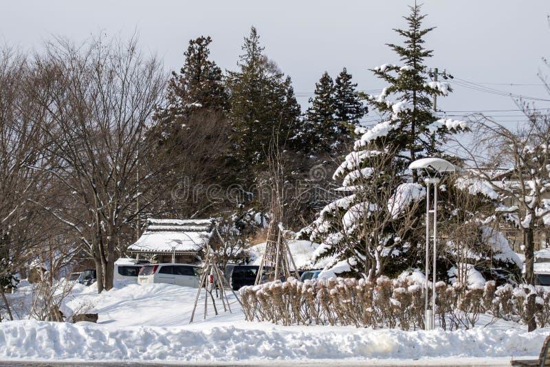 Neve che copre i vini di paglia avvolta intorno alle viti come protezione da freddo immagine stock