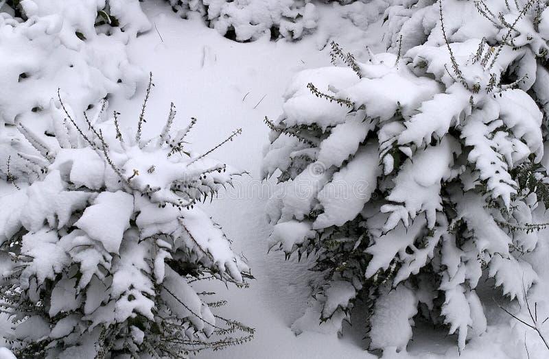 Neve coberta fotos de stock royalty free