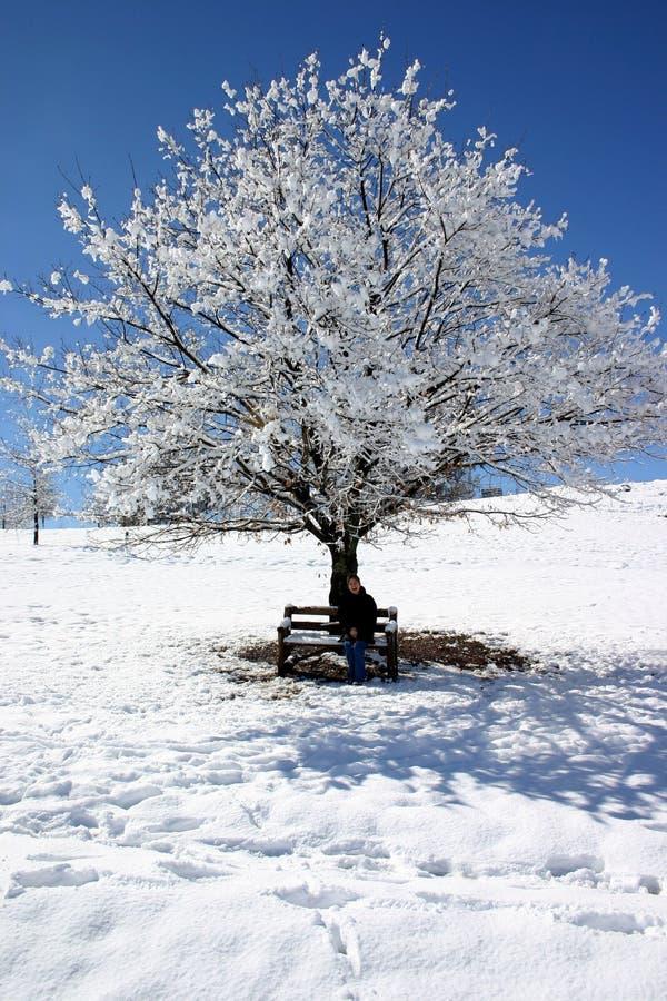 A neve cobriu a árvore foto de stock