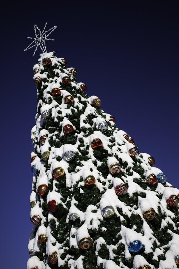 A neve cobriu a árvore de Natal foto de stock